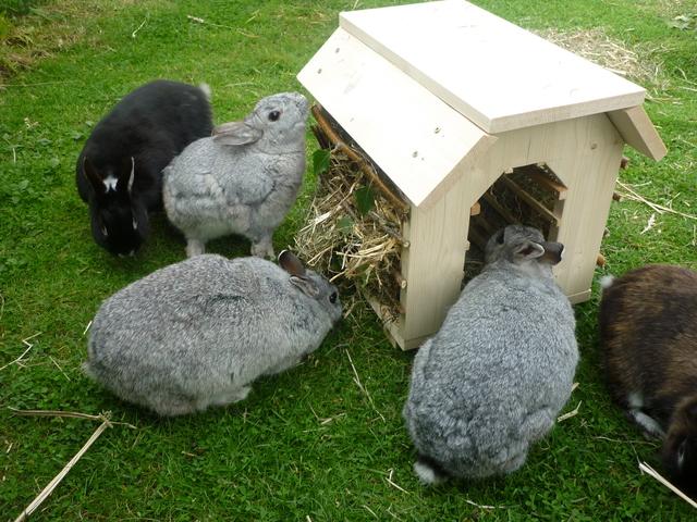 fragen zur anschaffung von kaninchen kaninchen forum by sweetrabbits made with forum101 by. Black Bedroom Furniture Sets. Home Design Ideas