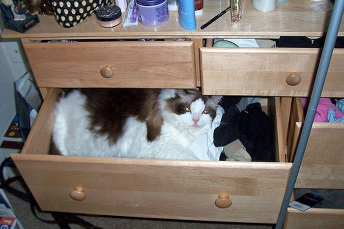 Jak przechowywać kota 80