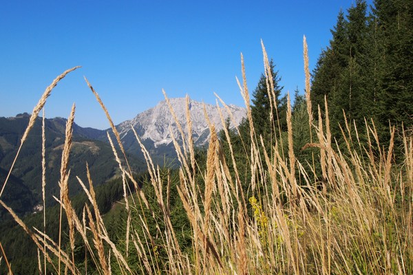 Eisenerzer Klettersteig : Pfaffenstein via eisenerzer klettersteig am 16.08.2013 forum