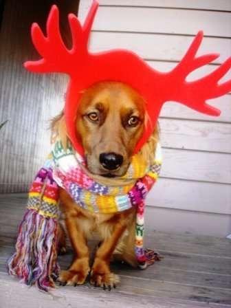 Zwierzęta w Święta 9
