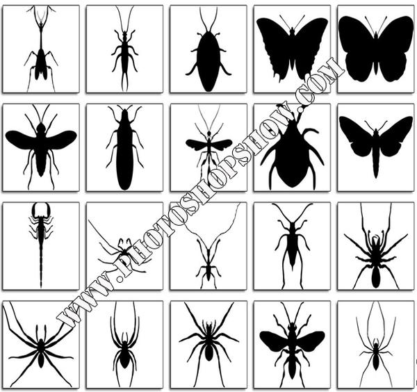 Photoshop için çeşitli böcek şekilleri