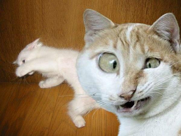 Śmieszne zdjęcia zwierząt #2 27