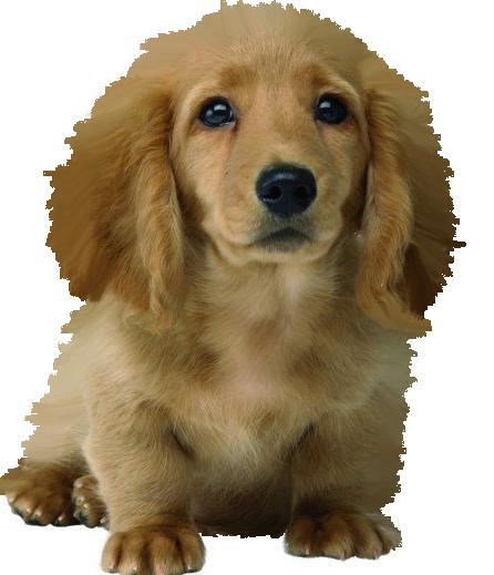 Výsledok vyhľadávania obrázkov pre dopyt gif png psi