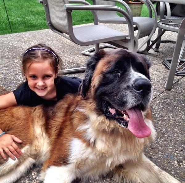 Pies - najlepszy przyjaciel człowieka #3 20