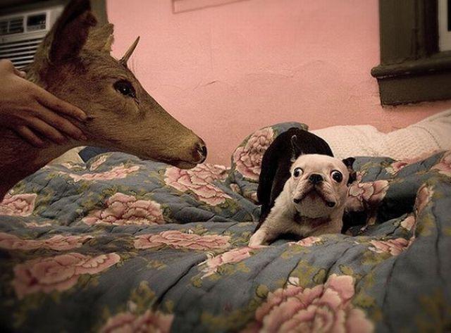 Śmieszne zwierzęta #9 6