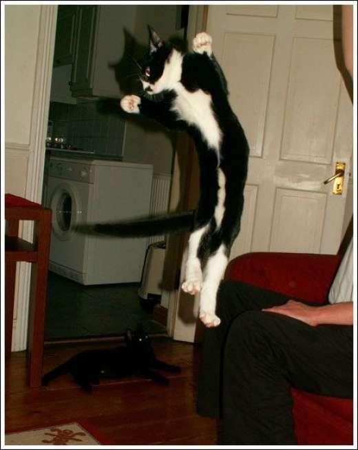 Kocie skoki 15