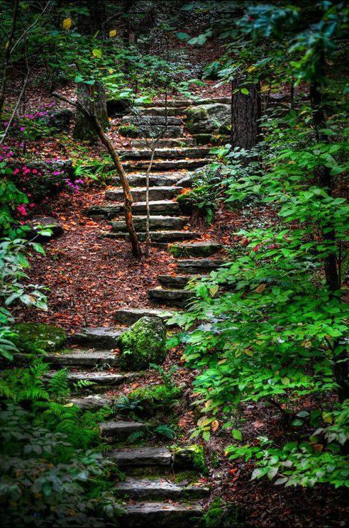 Tajemnicze lasy 33