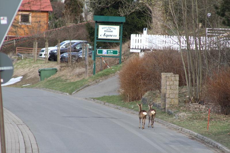 """Das Gelände des ehemaligen Hotels """"Hubertus"""" Rehe2015-04-11039ehuzq"""