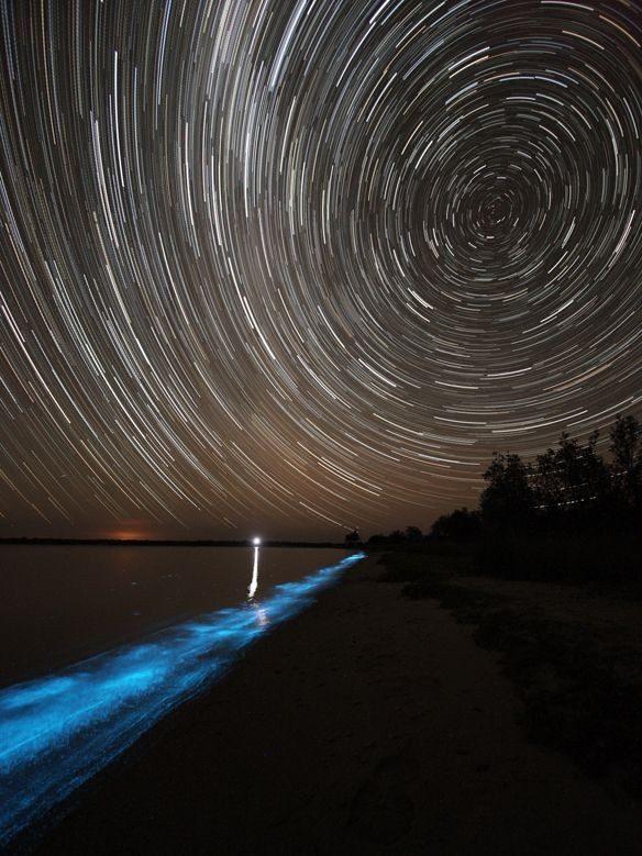 Bioluminescencja - niezwykłe zjawisko 3