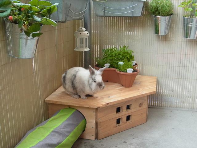 balkon garten terrasse zeigt her was ihr so anpflanzt kaninchen forum by sweetrabbits. Black Bedroom Furniture Sets. Home Design Ideas