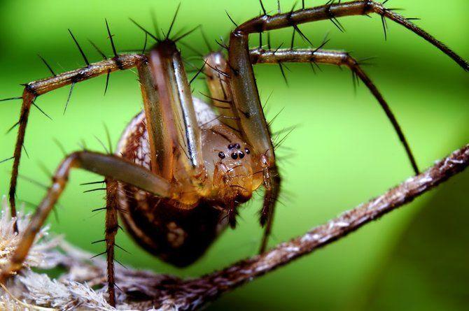 Makrofotografia - owady z bliska 1
