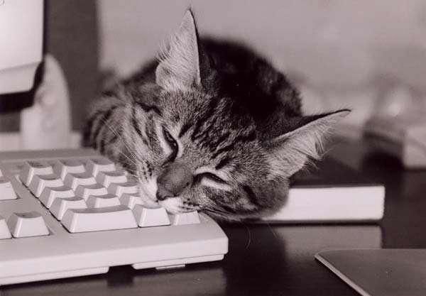 Koty i PC 2