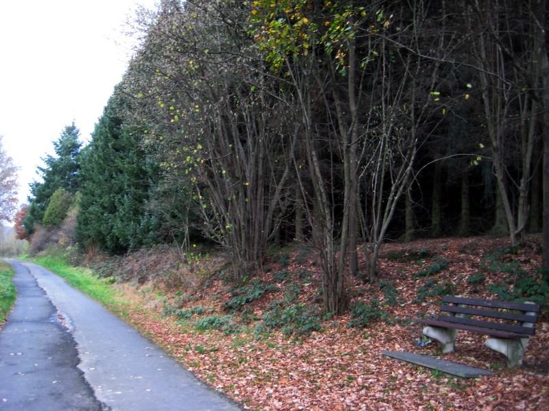 Wald mit Ruhebank