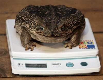 Śmieszne zdjęcia zwierząt #2 14