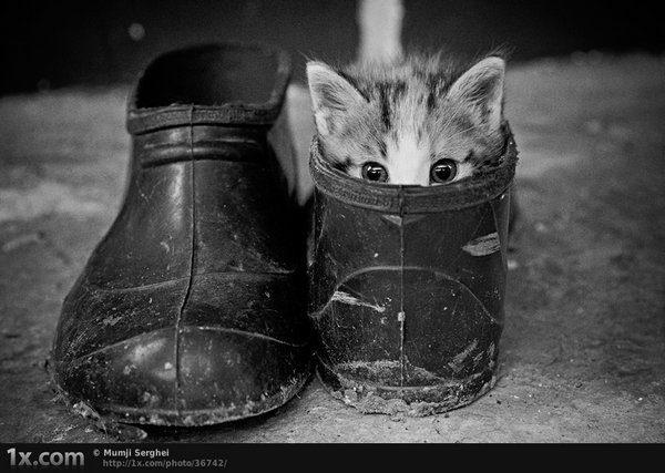 Przyczajone koty #3 7