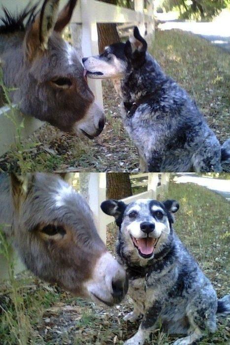 Przyjacielskie zwierzaki 27