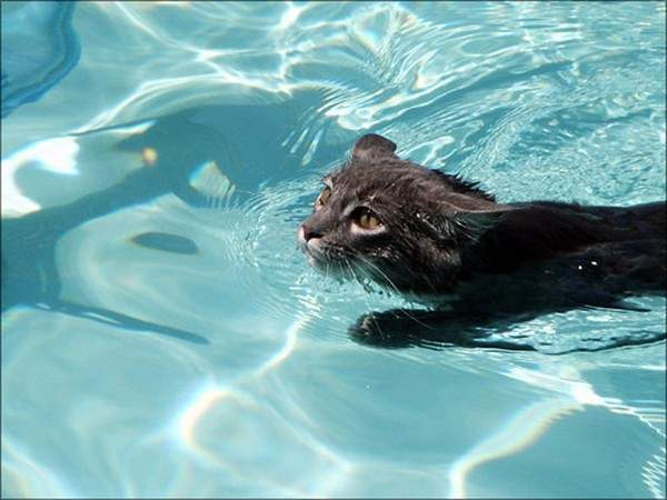 Koty i woda 1
