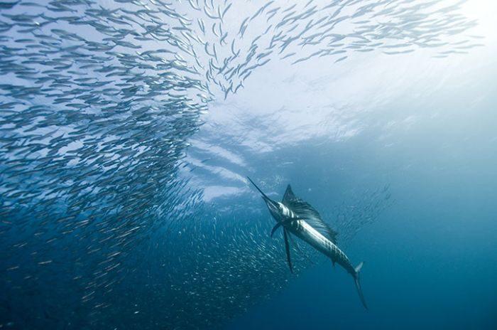 Podwodny świat 24