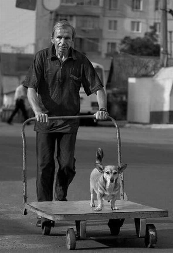 Pies - najlepszy przyjaciel człowieka 6