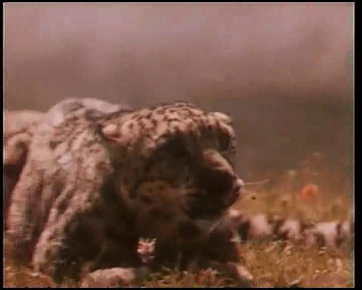 tigr.snegov.avi.imagef3iqz.jpg