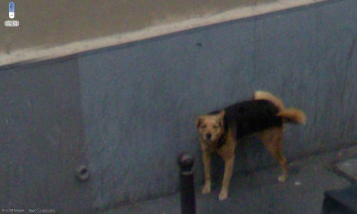 Nietypowe zdjęcia z Google Street View 50