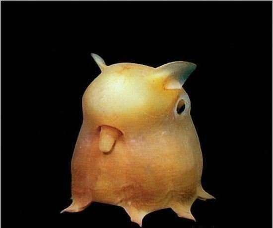 Najdziwniejsze zwierzęta świata 11