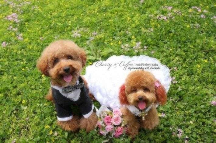 Psi ślub 5