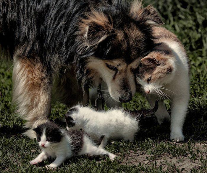 Przyjacielskie zwierzaki 8