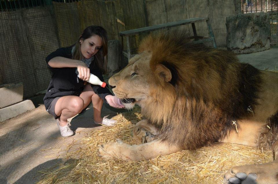 Zoo dla odważnych 4
