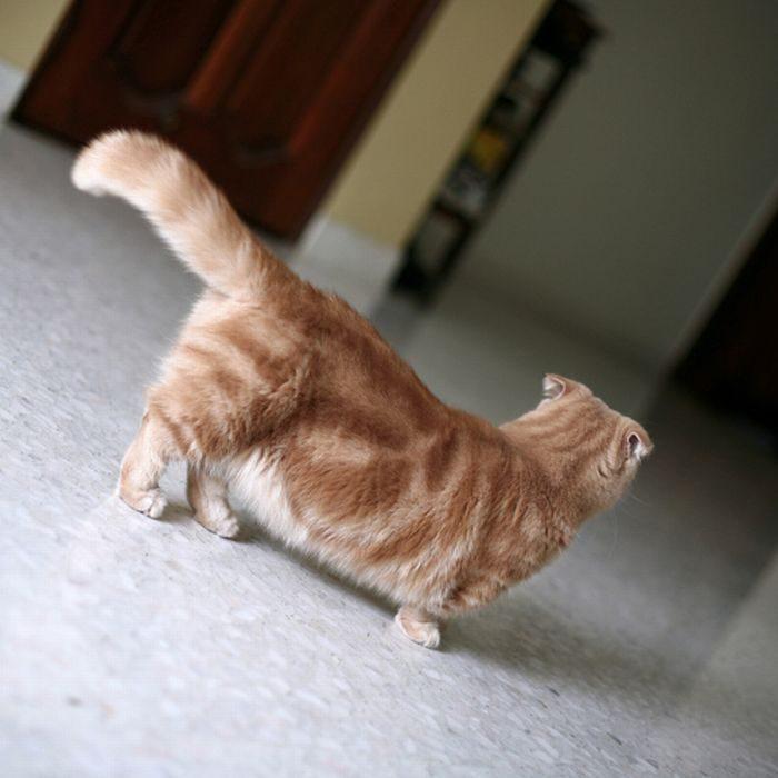 Koty #3 12