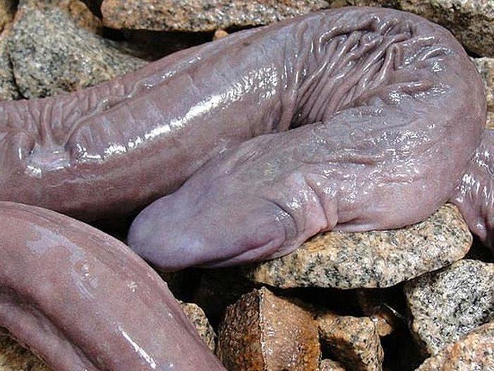 Miękki wąż 1