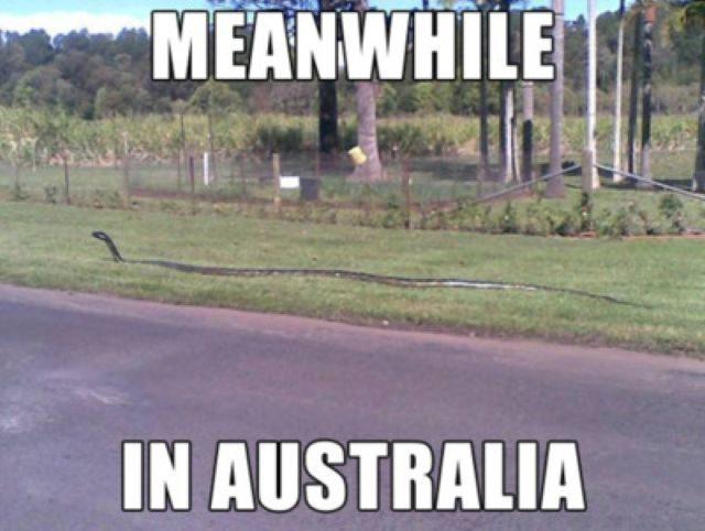 Tymczasem w Australii #2 16