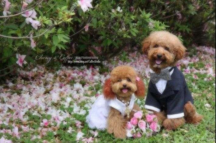 Psi ślub 12
