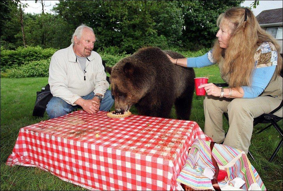 Z niedźwiedziem w domu 7