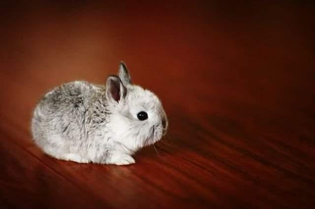 Śmieszne zdjęcia zwierząt #6 32