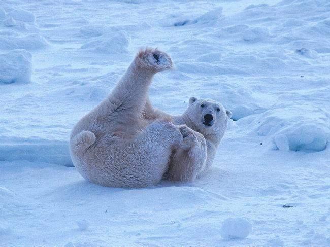 Śmieszne zdjęcia zwierząt #2 17