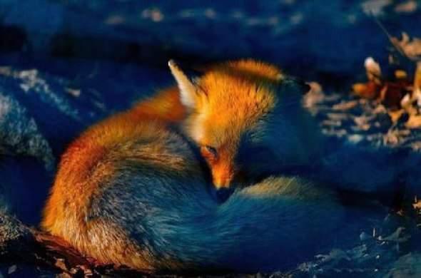 Firefox mania 5