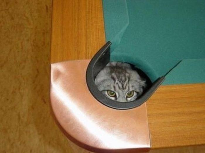 Przyczajone koty 13