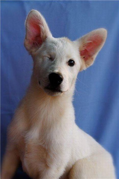 Psy, które dostały szansę na drugie życie 43
