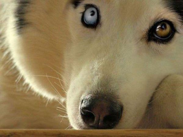 Śmieszne zdjęcia zwierząt #9 4