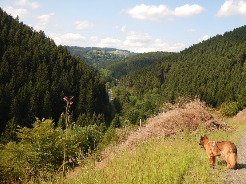 Blick vom großen Eschenberg 2009 und 2014 Warmeslocheschenberg2k8uon