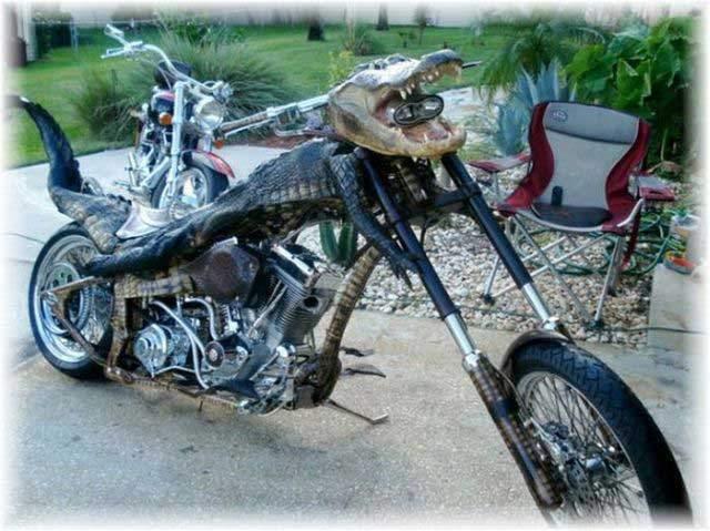 Alligator Bike 1