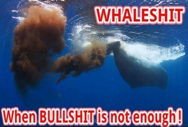 whaleshithye3y.png