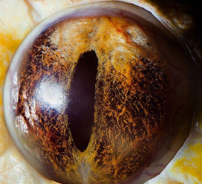 Oczy zwierząt 3