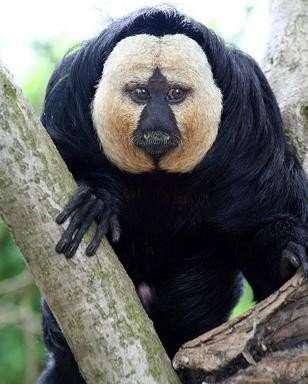 Najdziwniejsze zwierzęta świata 16