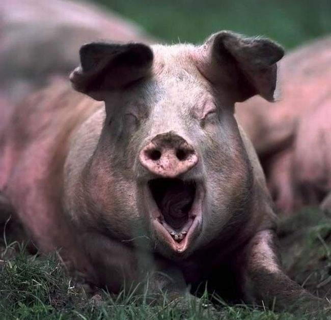 Śmieszne zdjęcia zwierząt #4 34