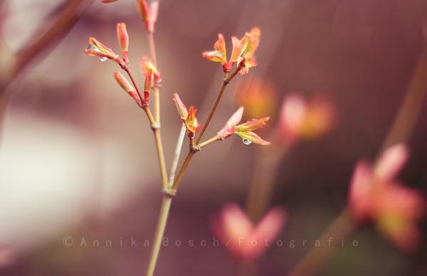 Spring is coming (?) :D Xy1von0043b5qdg