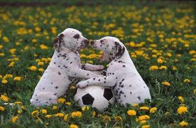 Śmieszne zdjęcia psów 14