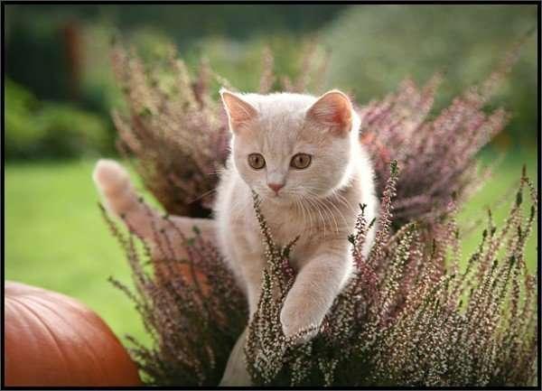 Koty 3