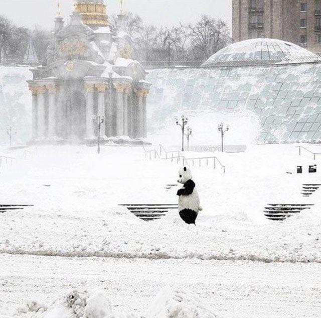 Atak zimy na Ukrainie 49